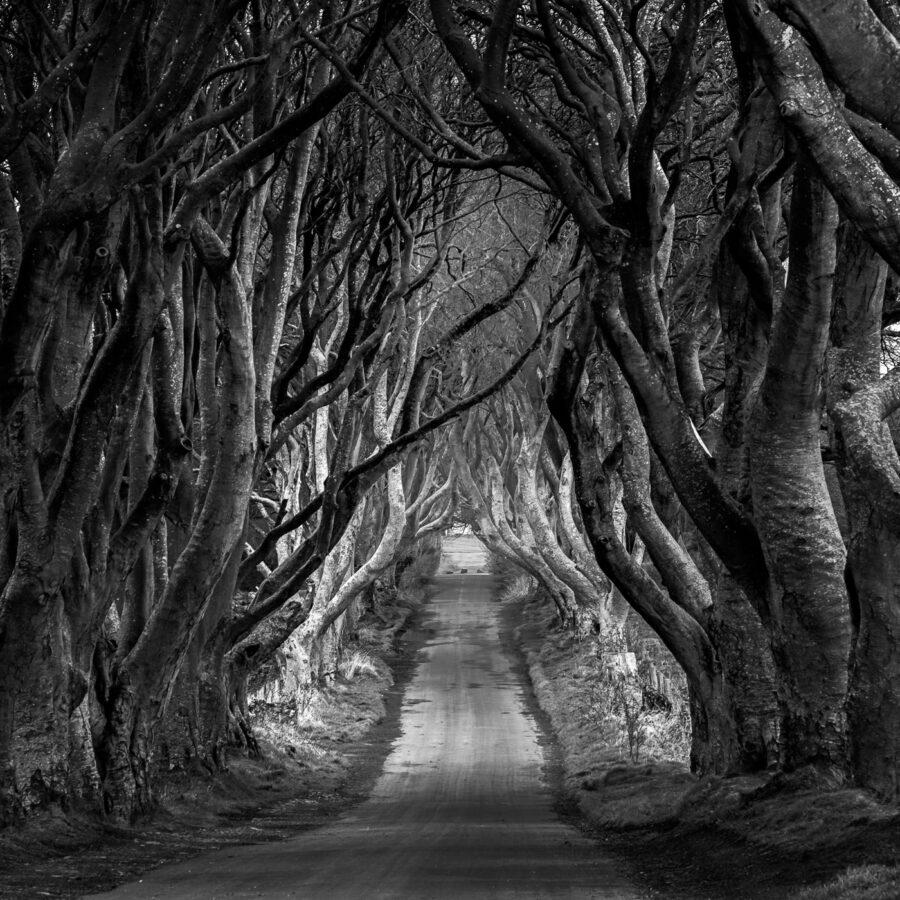 alessandro-zompanti-irlanda-nord-northern-ireland-11